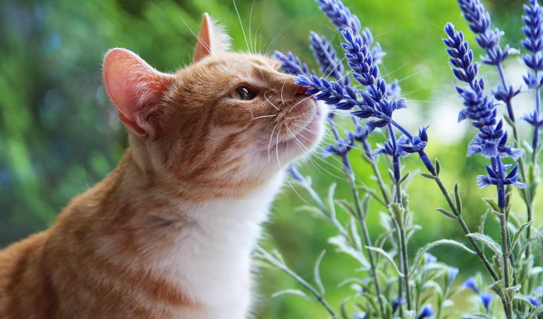 кот, май, содержать, растение, цветы, puma, природа, outdoor, фото