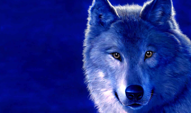 обои, волки, волк, фото, животные, во, кол, от, во