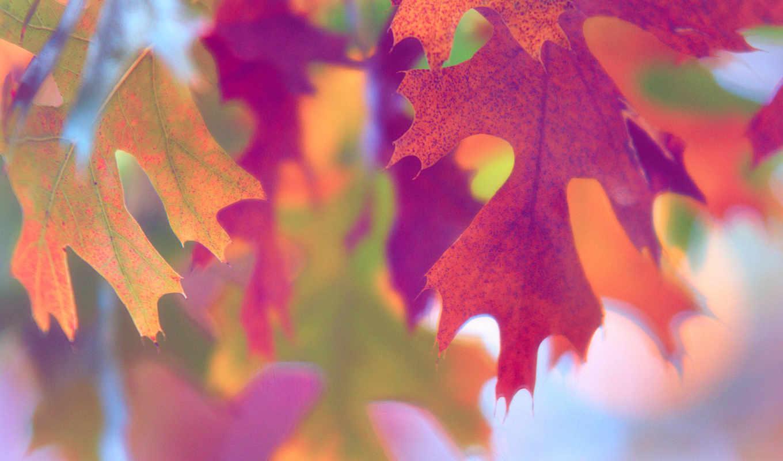 макро, осень, краски, листва,