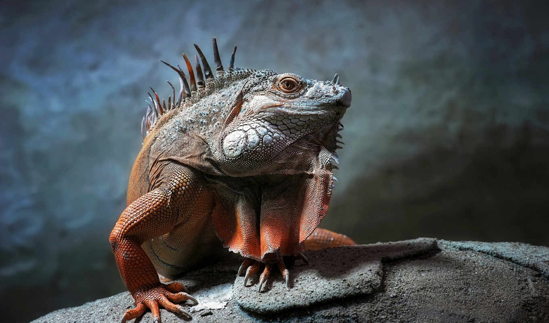 рептилии, животные, рептилия, чешуя, взгляд,