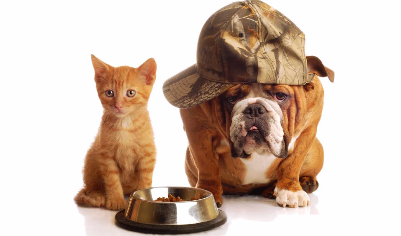 собака, кот, собаки,