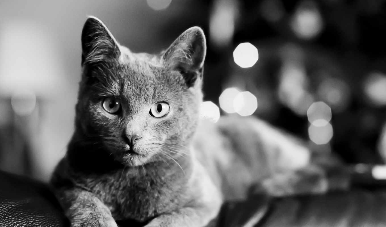 кошки, чёрно, белая, кот, животные, морда, старый, янв, окно,
