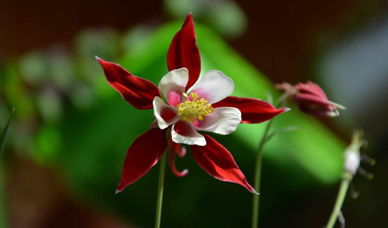 цветы, выпуски, июня,