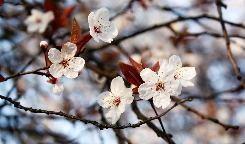 часть, весна, листики, цветы, дек,
