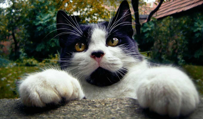 mundar, ciğere, animal, кот, foot