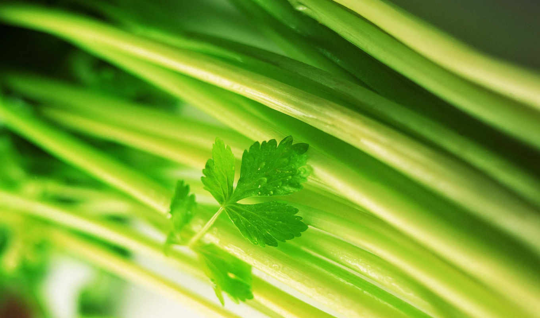 сельдерей, никогда, рано, выращивала, раньше, нынче, попробовать, купила, честно, решила, признаться, product,