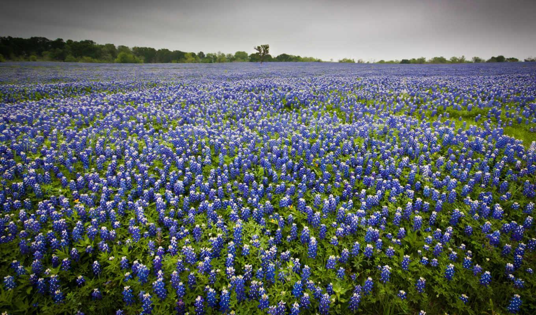 природа, поле, цветы, пейзаж, pictures, смотрите,