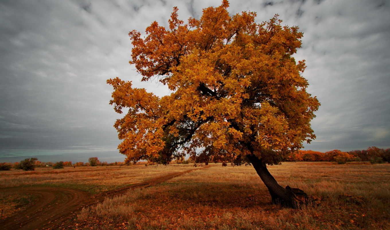 природа, поле, пейзаж, дерево, осень, картинка,