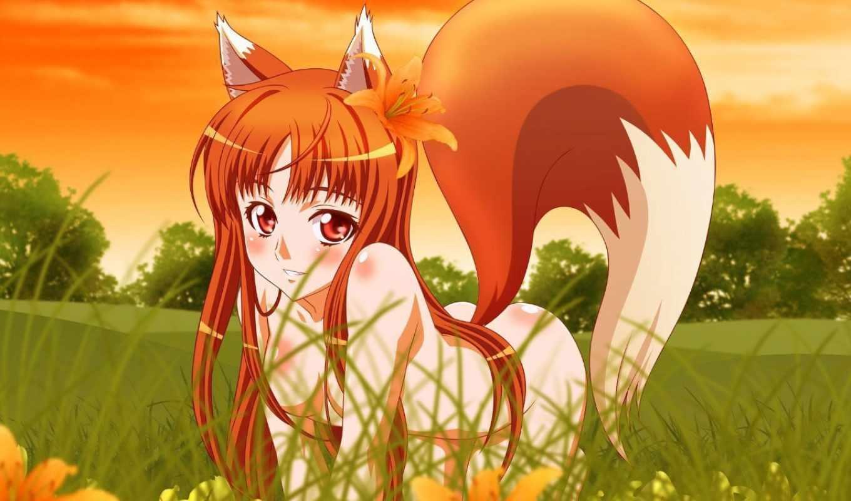 аниме, wolf, девушка, совершенно, spice,