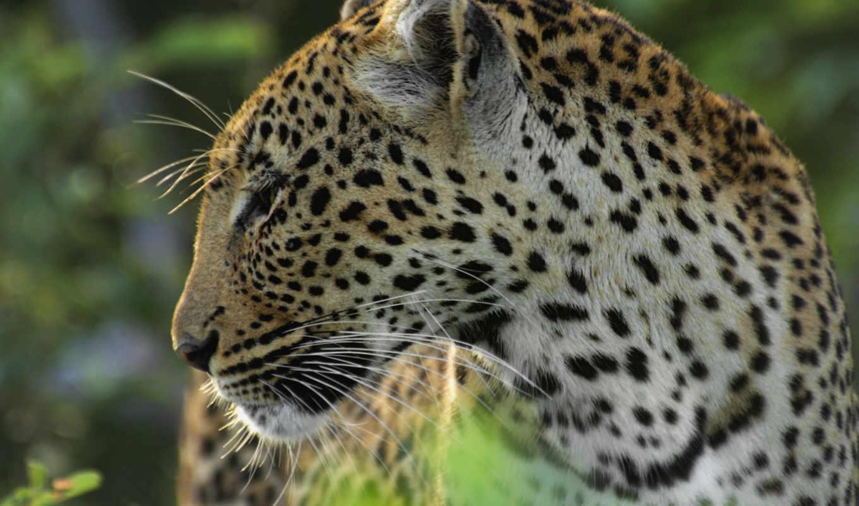 cats, кошки, stock, reserve, animals, game, motswari, images,