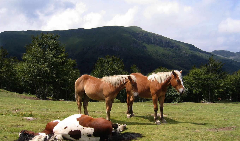 лошадь, об, have, free, red,