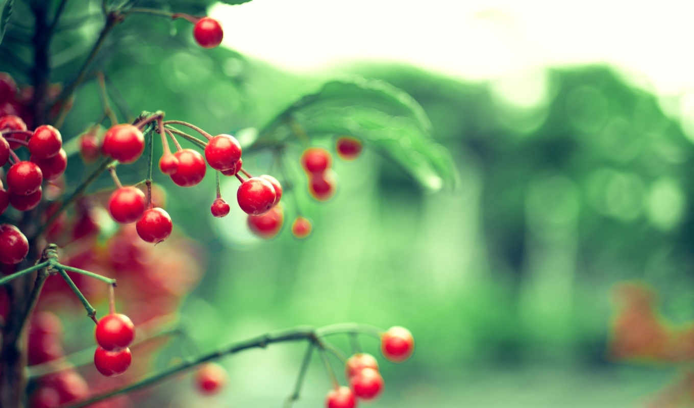 cherries, wild, galaxy, share, miscellaneous,