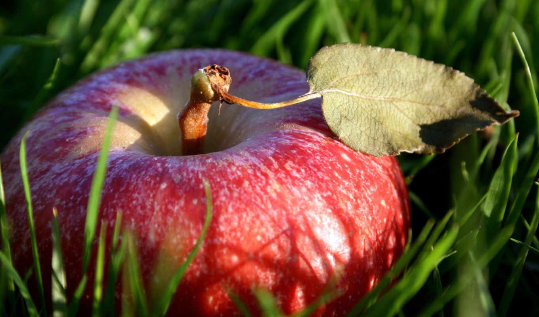 apple, яблоки, траве, фрукты, еда, красное,