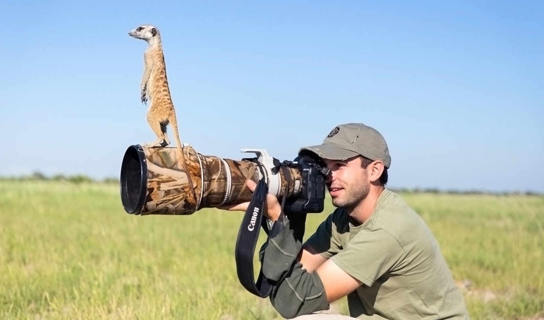 фотограф, burrard, lucas, will, беррард, сурикаты, дикой,