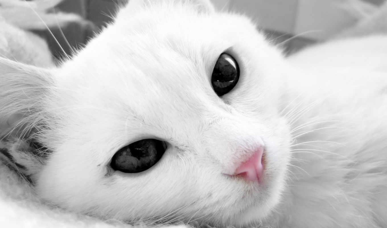 кот, white, глазами, свет,