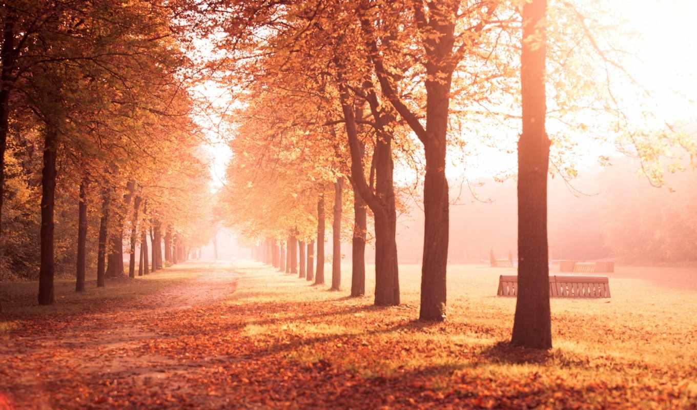 листья, осень, деревья, trees, природа, аллея, флот,