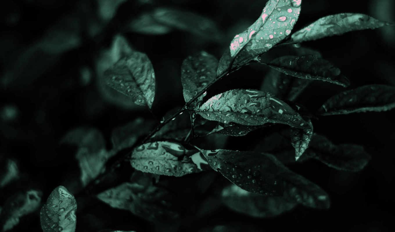 листва, мокрая, дождя, после, природа, насыщенный, зелёный,