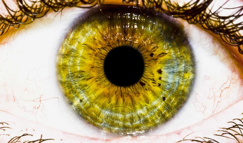 глаз, зрачок, eyes, eyelashes, макро, desktop,
