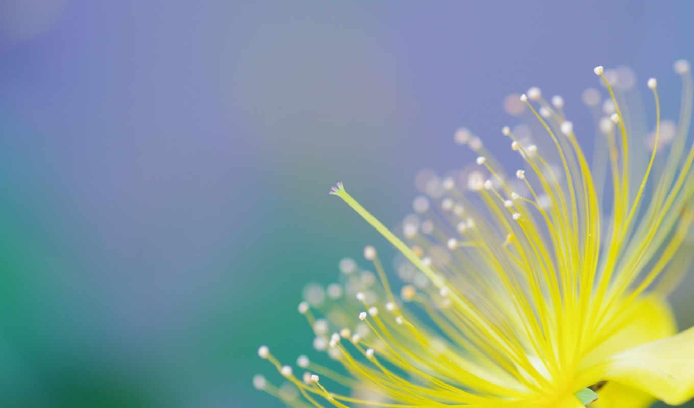 una, desenfoque, macro, flowers, foto,