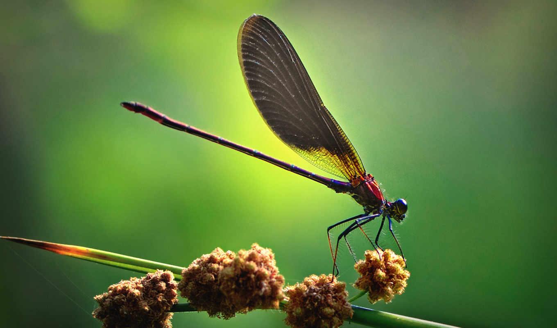макро, насекомые, вас, насекомых, речные, насекомыши, цвета, следы, стрекозы,