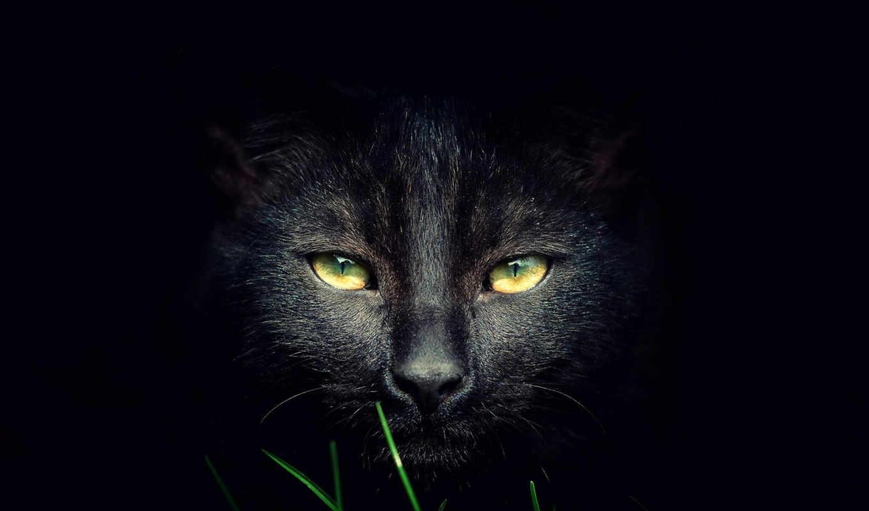 от, czarne, подборка, кошки, кошек,