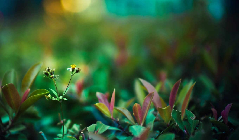 life, высокое, зелёный, лес, долой,