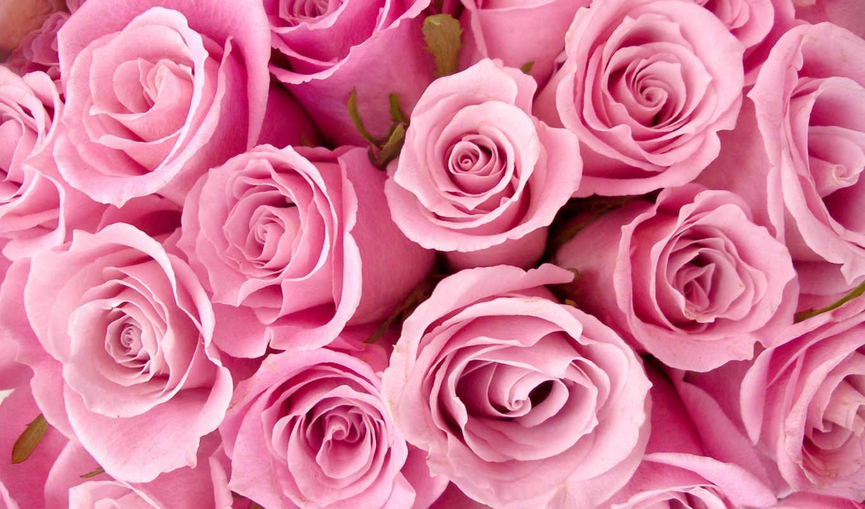 цветы, розовые, розы, розовый, картинка, бутоны, букет, прекрасные, стебли,