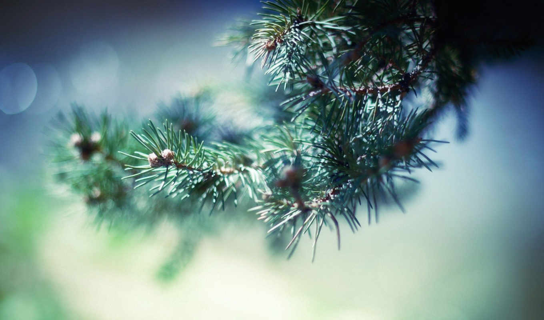 branch, иголки, eli, снег, winter, ёль, природа, ветки,
