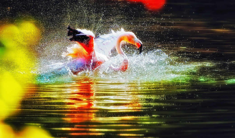 фламинго, закат, flamingos, animals, love, sunsets, birds, water,