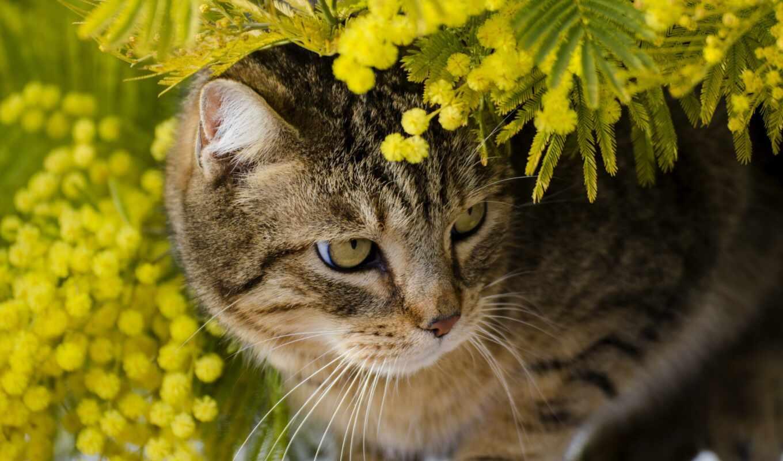 mimosa, тюлень, кот, впервые, innocent, shine, красавица, branch, her