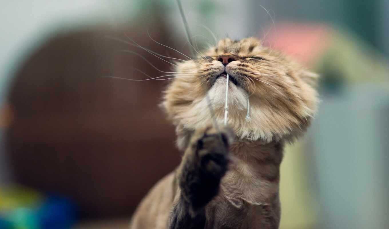 кот, волосы, loss, treatment
