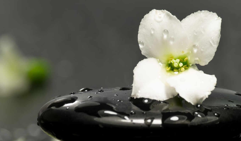 цветок, камень, капли, картинка, zen, spa,