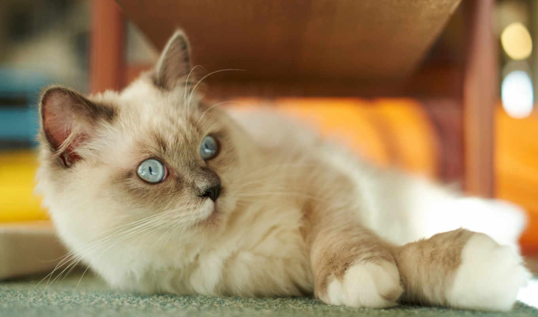 cat, кошки,