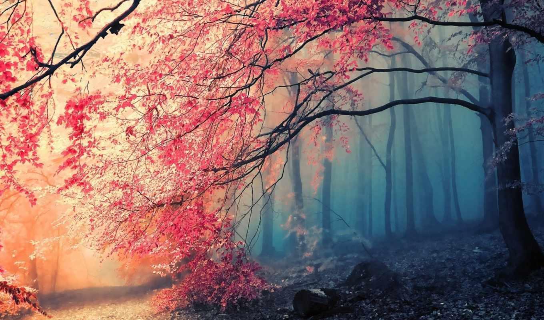 лес, осень, туман, деревья, картинку, картинка, поделиться, nature,