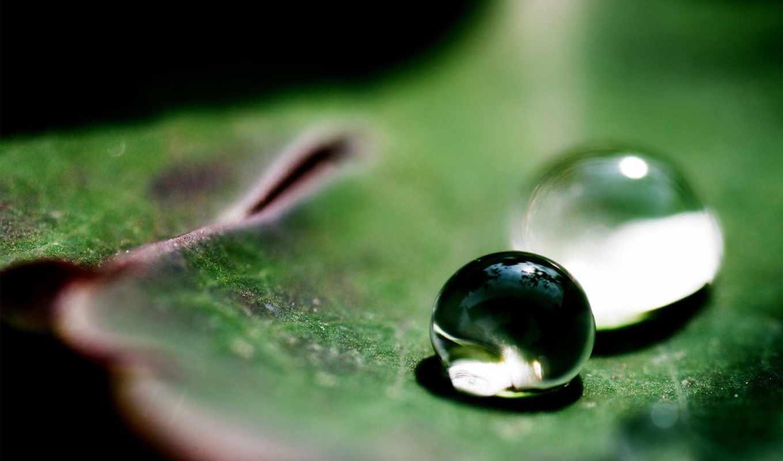 роса, макро, росы, капли, лист, water,