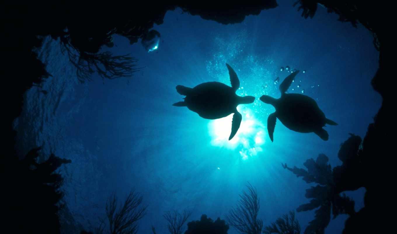 черепахи, кошек, better, несколько, причин, how, much, фотографий,