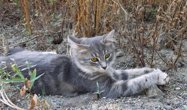 кошки, cats, коты,