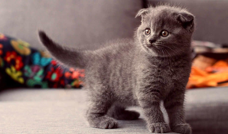 кот, котенок, свет, смотреть, кошки, серый,