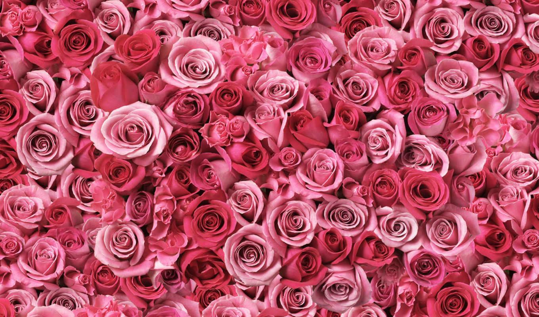 цветы, desktop, free, flowers,
