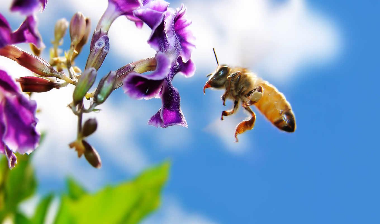 пчелка, цветы, мед,