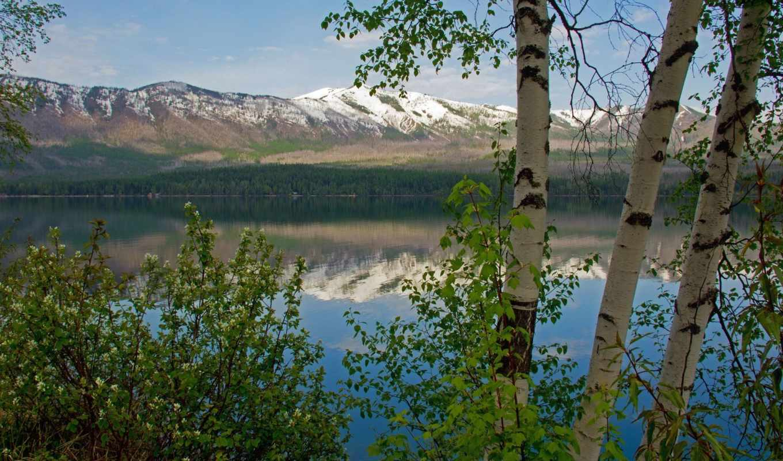 тихая, заводь, trees, озеро, спокойного, березы, collector, landscape,