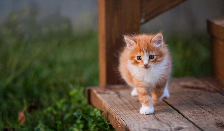 kitty, кот, baby, доска, котенок, grey, смотреть, стремянка, малыш, лежак
