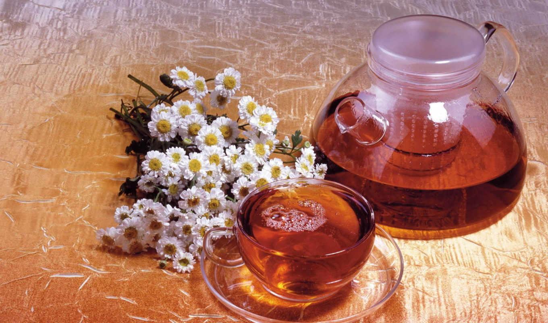 tea, растений, лекарственных, отвар, chamomile, хотите, лекарственные, android, растения,