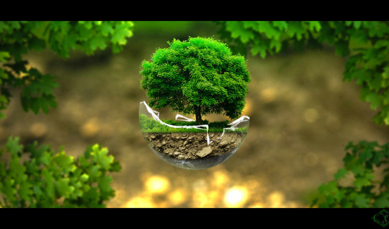 rainmeter, скины, дерево, fantasy,