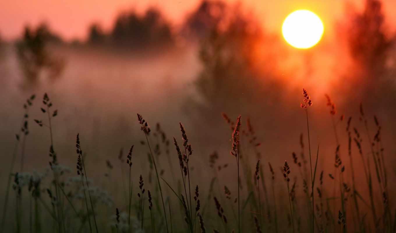 лес, трава, туман, закат, солнце,