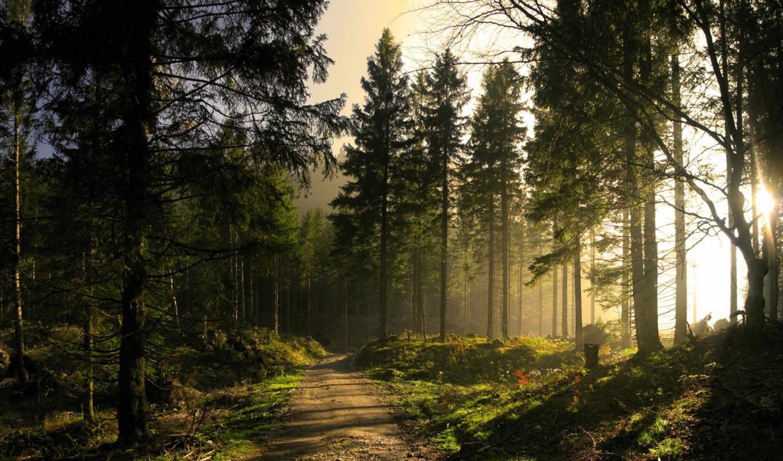 природа, если, коллекция, фэнтази, широкоформатные, лес,