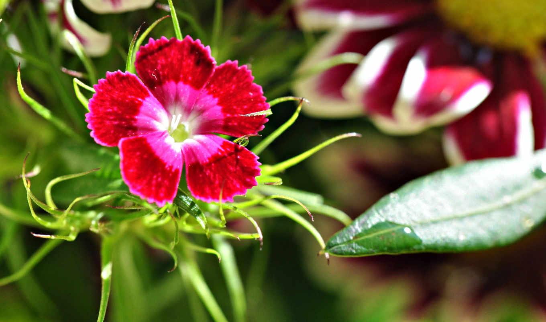 природа, fonds, ecran, gratuit, téléchargement, цветок,