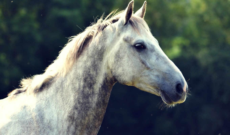морда, лошадь, profile, грива, голова,