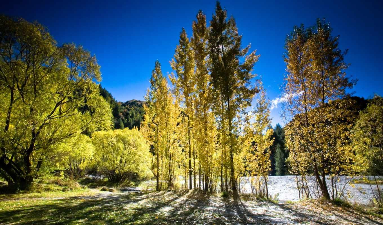 природа, новой, небо, trees, картинка, заставки, зеландии,