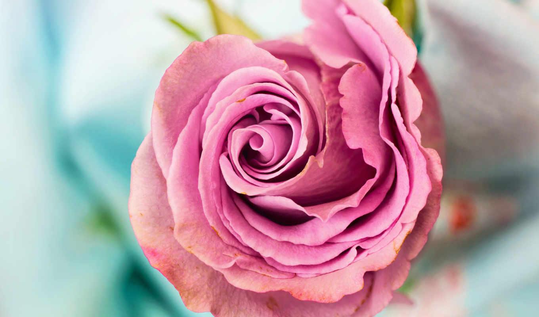 ми, диас, buenos, розовый, amor, rosa,